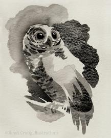 Owl, ink