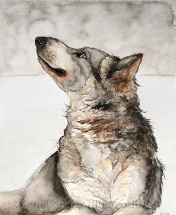Wolf Portrait, watercolor