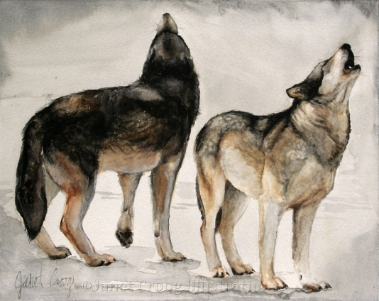 Wolves, watercolor